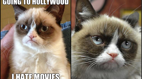 Internet, Hollywood, Grumpy Cat, mem, Film, Producent